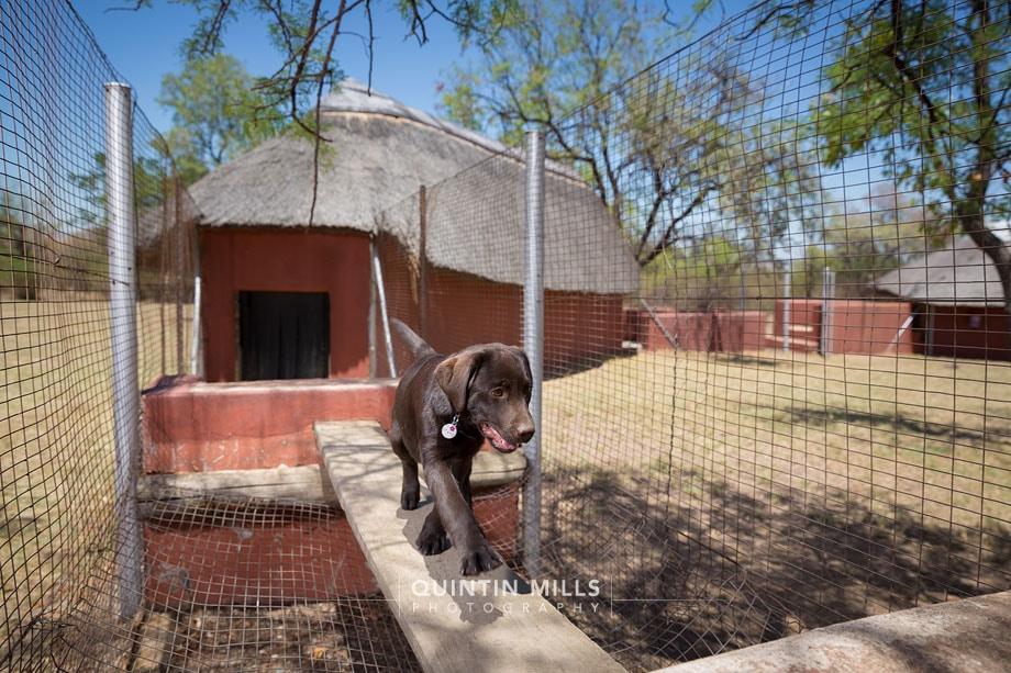Mondial K9 security dog training photography
