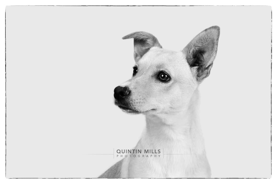 Animal Anti-Cruelty League Johannesburg by Quintin Mills.